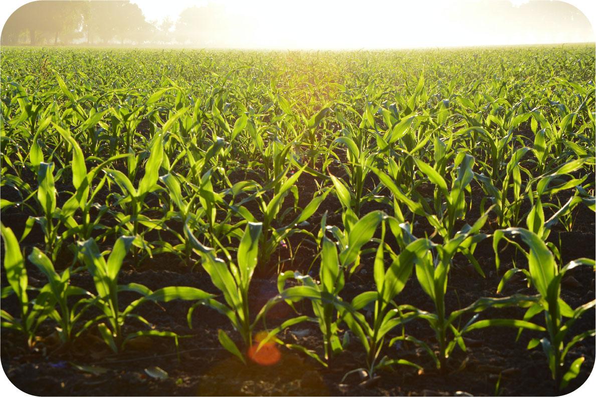 beregeningspomp landbouw